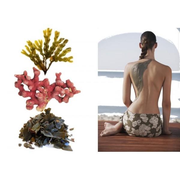 Enveloppement amincissant aux 3 algues